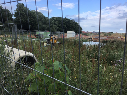 polluted pond in the new Cuckoo Meadow housing development, Hailsham, July 2020 - photo by Neil Cleaver
